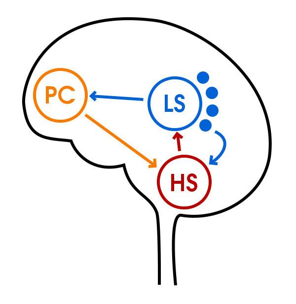 DE werking van de drie breinen volgens de Aser methode