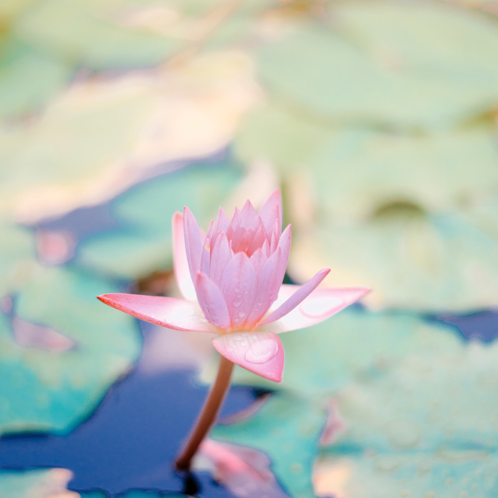 Werk aan je persoonlijke groei en ontwikkel jezelf als Aser-therapeut